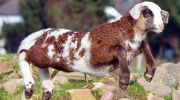 عشر حيوانات مهجنة لم تسمع عنها من قبل